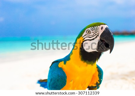 Cute bright colorful parrot on the white sand in the Maldives - stock photo