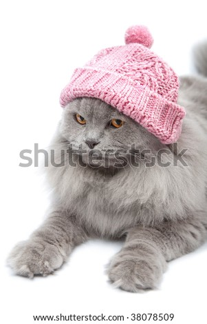 cute british cat wearing pink cap isolated - stock photo