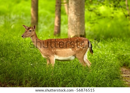 cute brown deer in the woods - stock photo