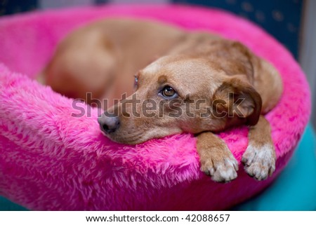 Cute brown female dog in pink basket