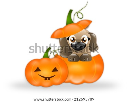Cute brown puppy in orange halloween pumpkin