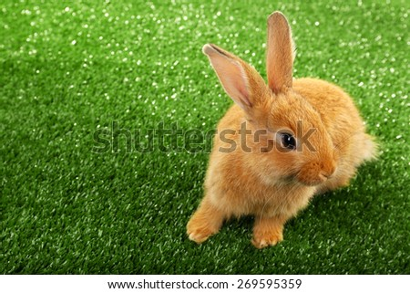 Cute brown rabbit on green grass background