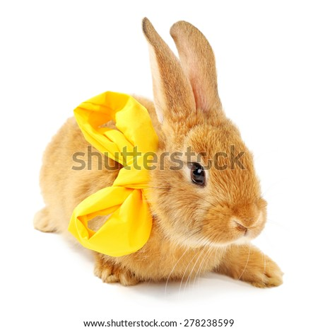 Cute brown rabbit with scarf isolated on white - stock photo