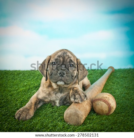 Cute Bulldog puppy laying in the grass with a bat and a baseball, with a blue sky behind him.