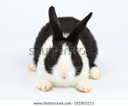 Cute bunny - stock photo