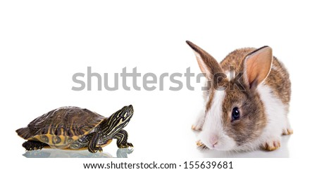 Cute Bunny and Turtle, isolated on white background. Concept: Competition - stock photo