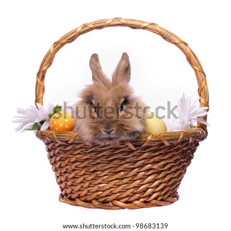 Cute bunny in basket with easter eggs isolated on white - stock photo