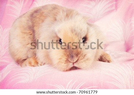 Cute bunny in pink surroundings