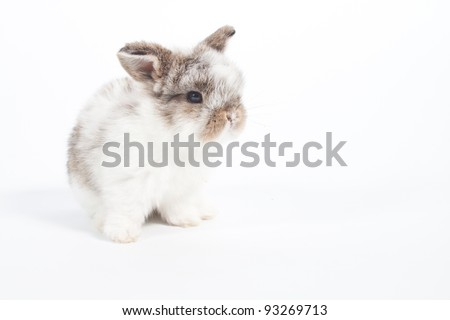 Cute bunny on  white background - stock photo