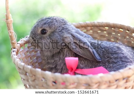 Cute bunny outdoors in the basket - stock photo