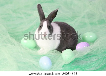 Cute Bunny Photographed in Studio 13 - stock photo