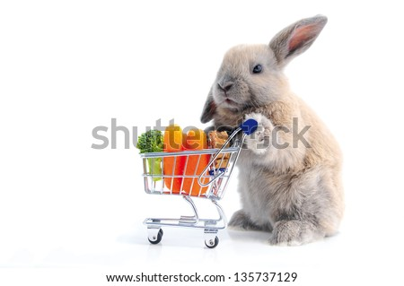 Cute bunny shopping for his favorite snacks with shopping cart, isolated on white - stock photo