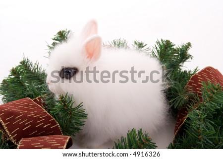 Cute bunny with blue eyes inside christmas wreath - stock photo