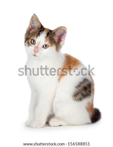 Cute calico kitten isolated on white. - stock photo