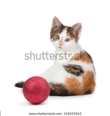 Cute calico kitten sitting next to a red Christmas ball ornament isolated on a white background. - stock photo