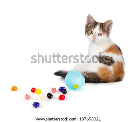 Cute calico kitten sitting next to jellybeans spilled out of an Easter egg isolated on a white background. - stock photo