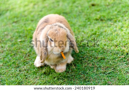 Cute caramel rabbit with a carrot in grass  - stock photo