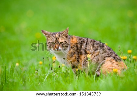 cute cat among flowers on the green meadow - stock photo