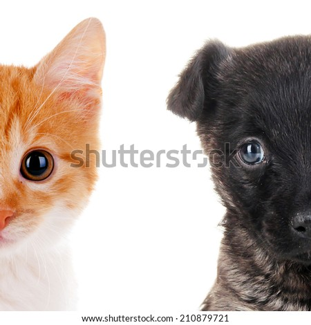 Cute cat and dog faces isolated on white - stock photo