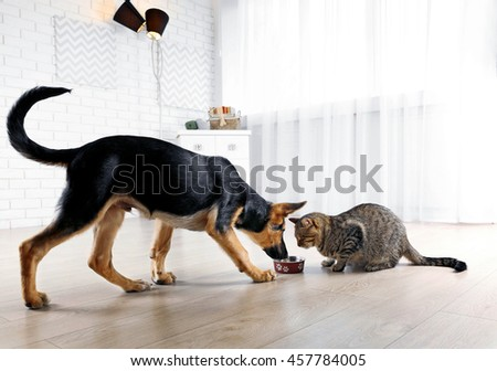 Cute cat and funny dog eating food - stock photo
