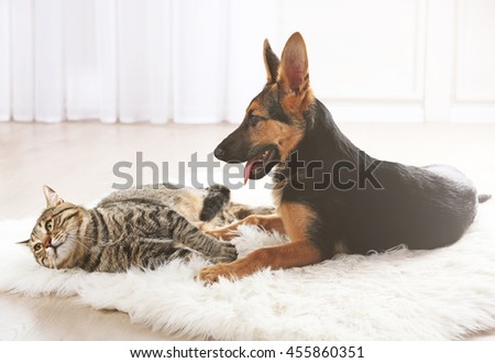 Cute cat and funny dog on carpet - stock photo
