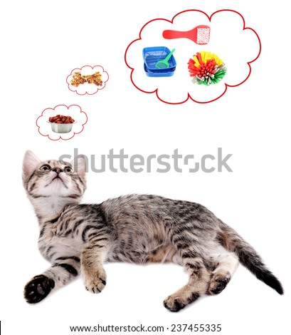 Cute cat and it thought bubbles isolated on white - stock photo