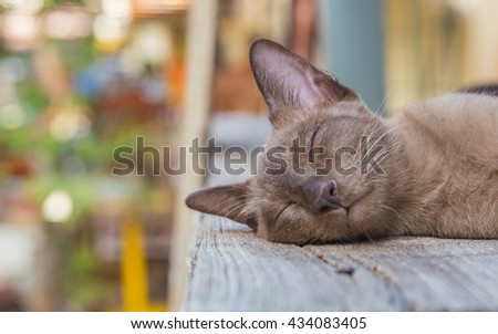 Cute cat, cat lying on the wooden floor in the background blurred close up playful cats, cats, cats, cats relaxing vacation. - stock photo
