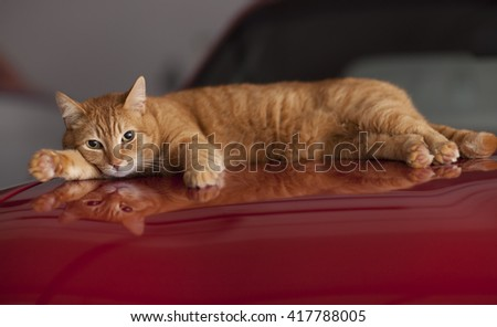 Cute Cat Chilling On Car