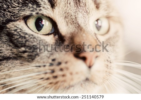 Cute cat close-up portrait. Focus on its magnetic eye. Adorable kitten series. - stock photo
