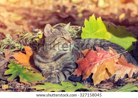Cute cat covered with leaves lying in the park - stock photo