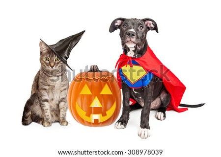 Cute cat dressed as a witch and dog wearing super hero costume for Halloween with a jack-o-lantern pumpkin - stock photo