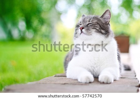 Cute cat enjoying himself outdoors. - stock photo