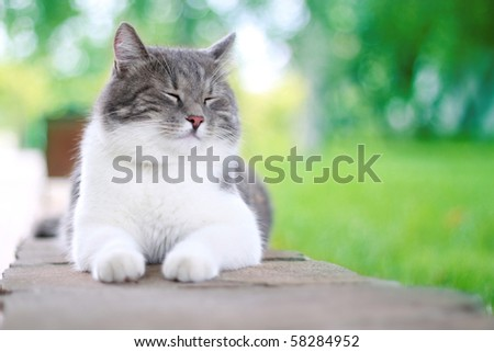 Cute cat enjoying his life outdoors. - stock photo