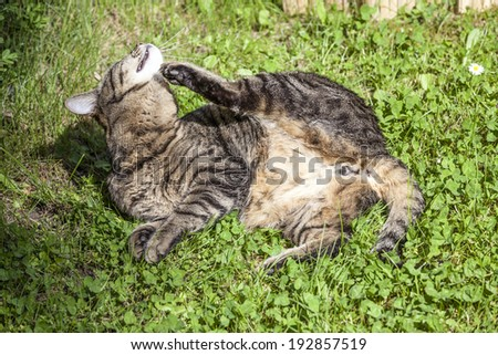 Cute cat enjoys his life outdoors  in the garden - stock photo