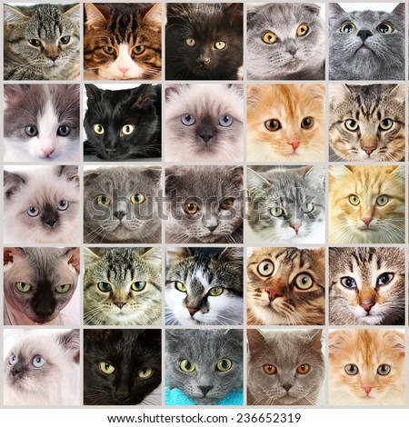 Cute cat faces collage - stock photo
