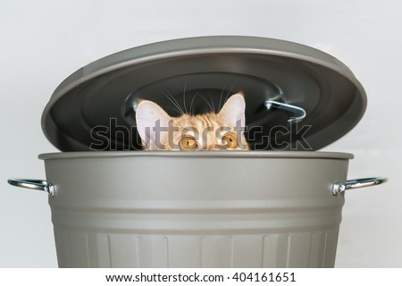 Cute cat hiding in a grey bucket with lid. - stock photo