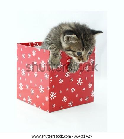 Cute cat in a red box - stock photo