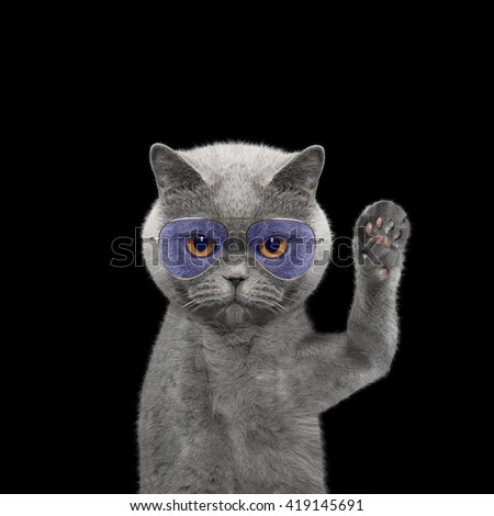 Cute cat in glasses is greeting you -- isolated on black