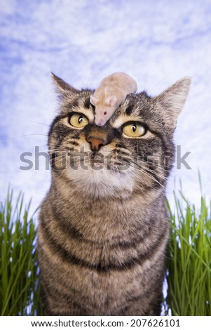 Cute cat in the grass with mouse on nose blue sky background - stock photo