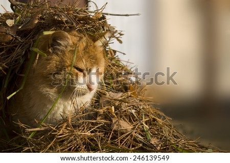 cute cat in the needles - stock photo