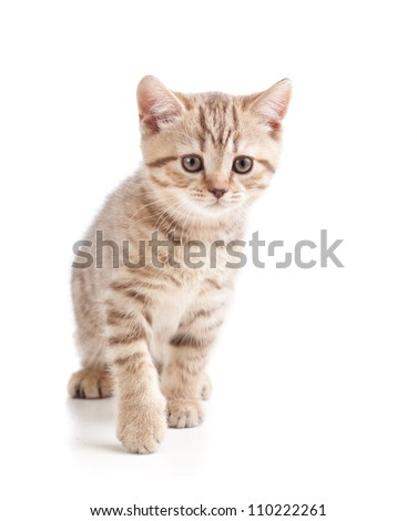 cute cat kitten on white background - stock photo