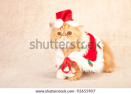 Cute cat kitten with Santa cape and hat