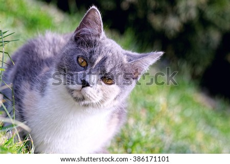 Cute cat laying in the grass. - stock photo