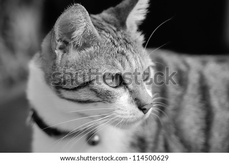 Cute cat looking at something - stock photo
