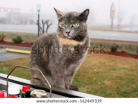 Cute cat looking through a restaurant window