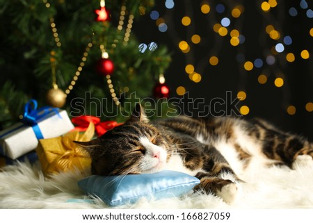 Cute cat lying on carpet with Christmas decor - stock photo