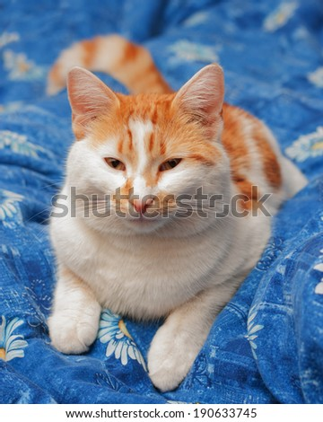 Cute cat lying on sofa - stock photo