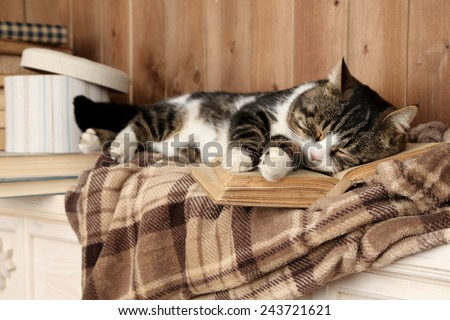 Cute cat lying with book on plaid  - stock photo