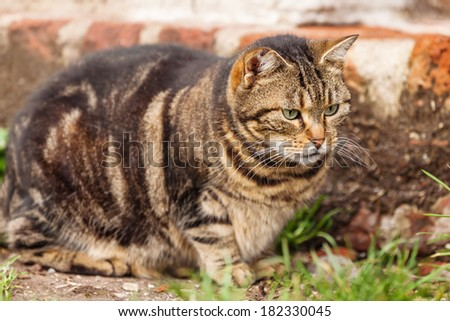cute cat observing the ground