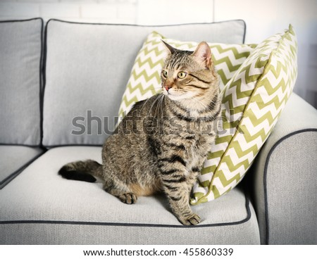 Cute cat on grey couch - stock photo